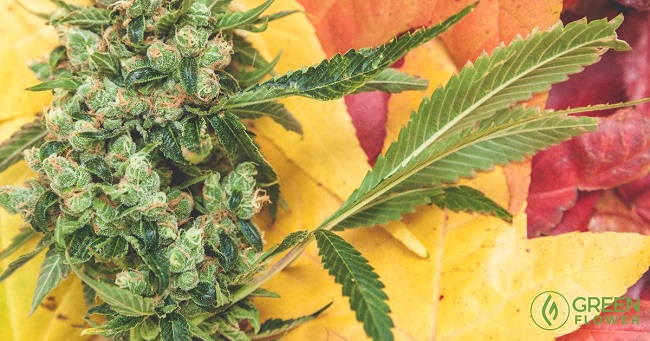 For the cannabis community, there is much to be thankful for right now.