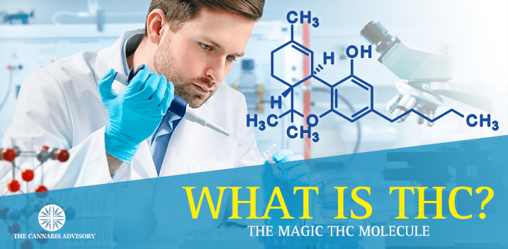 What is THC