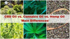 How is Hemp Oil Different from Other Cannabis Products?