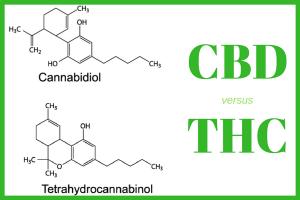Hemp vs Weed Is Like CBD vs THC