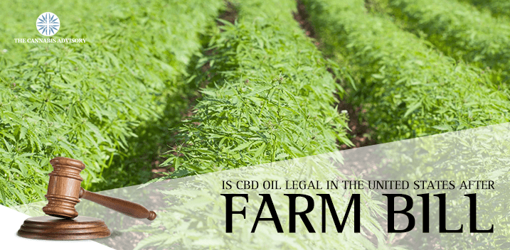 Is CBD Oil Legal in the United States After Farm Bill?