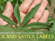 Indica or Sativa