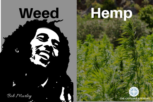 Hemp vs weed. It's probably the biggest confusion to pervade the cannabis industry.