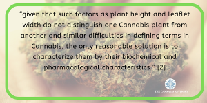 Looking for different strains of marijuana is an inaccurate way of describing chemically distinct plant types.