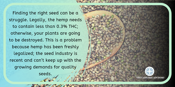Since hemp has been freshly legalized; the seed industry is recent and can't keep up with the growing demands for quality seeds.